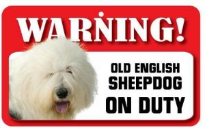 Old English Sheepdog Warning Sign-0