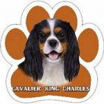 Cavalier King Charles Paw Print Car Magnet-0