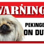 Pekingese Warning Sign-0