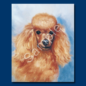 Poodle (apricot) - 6 pack Note Cards-0