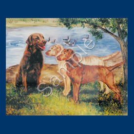 Chesapeake Retriever - 6 pack Note Cards--0
