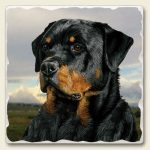 Rottweiler - Tumbled Stone Magnet-0