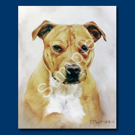 Staffordshire Bull Terrier- 6 pack Note Cards-0