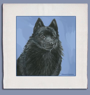 Schipperke Kitchen Tea Towel-0