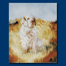 Clumber Spaniel- 6 pack Note Cards--0