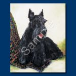 Scottish Terrier - 6 pack Note Cards-0