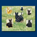 Scottish Terrier - Gift Wrap paper-0