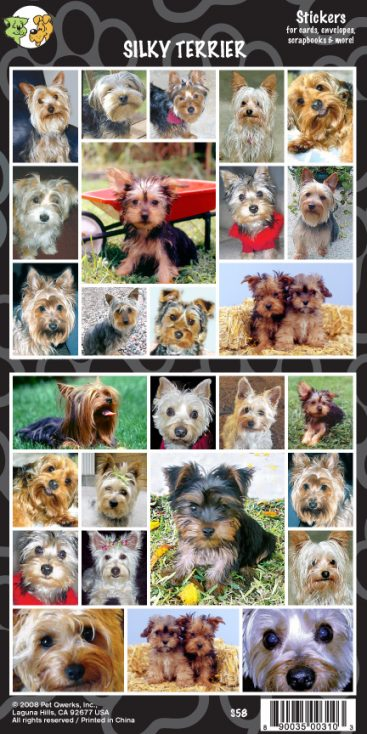 Silky Terrier - Stickers-0