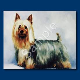Silky Terrier - 6 pack Note Cards--0