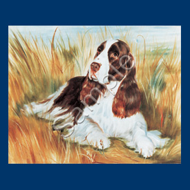 English Springer Spaniel - 6 pack Note Cards--0