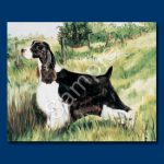 English Springer Spaniel - 6 pack Note Cards-0