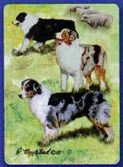 Australian Shepherd - Deck of Playing Cards-0