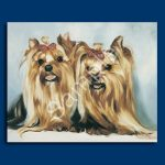 Yorkshire Terrier - 6 pack Note Cards--0