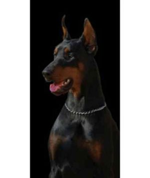 Doberman 100% Cotton Beach Towel-0
