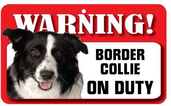 Border Collie  Warning Sign-0