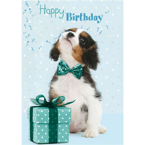 Birthday Cavalier King Charles Spaniel- Soundchip Card-0