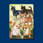 Chihuahua – Deck of Playing Cards-0