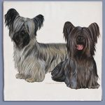 Skye Terrier Kitchen Tea Towel-0