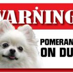 Pomeranian Warning Sign-0
