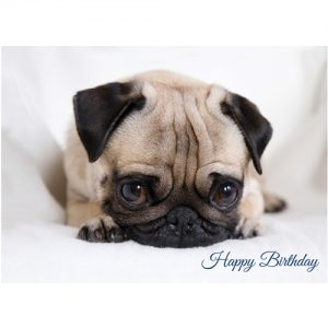 Surprised Pug - Birthday Card-0