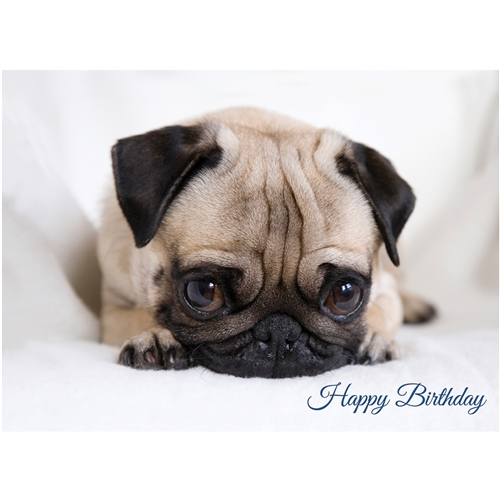Surprised Pug – Birthday Card-0