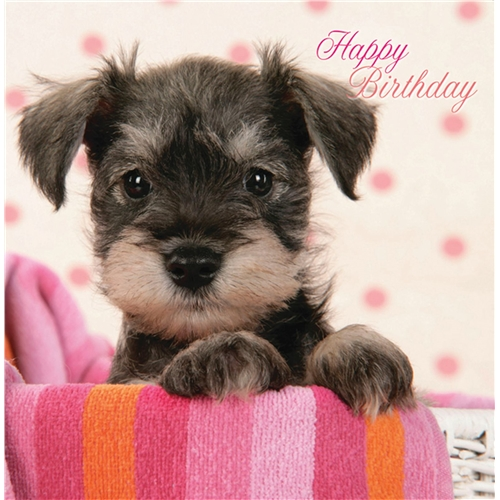 Pups in a basket –  Birthday Card-0