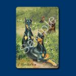 Doberman - Deck of Playing Cards-0