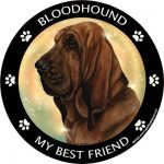 Bloodhound My Best Friend Magnet-0