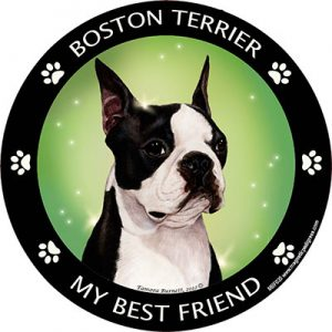 Boston Terrier My Best Friend Magnet-0