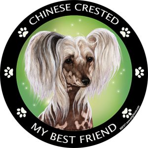 Chinese Crested My Best Friend Magnet-0