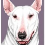 Bull Terrier (White) - Blank Card-0