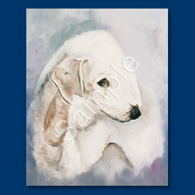 Bedlington Terrier- 6 pack Note Cards--0