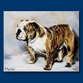 Bulldog – 6 pack Note Cards=-0
