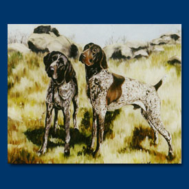 German Short-Haired Pointer - 6 pack Note Cards--0