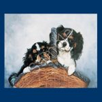 Cavalier King Charles Spaniel- 6 pack Note Cards!-0