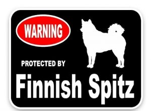 Finnish Spitz Car Sticker -0