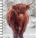 Highland Cow in Snow 3D Note Books-0