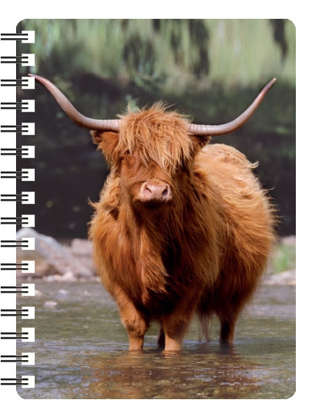 Highland Cow in Water 3D Note Books-0