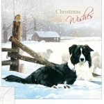 Border Collie - Christmas Wishes Card-0