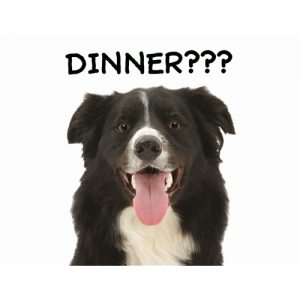 Border Collie Dinner? Giant Pet Placemat-0