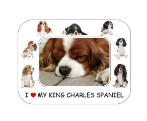 Cavalier King Charles Spaniel Magnetic Photo Frame & Magnet-0