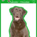 Labrador (chocolate) - Air Freshener-0