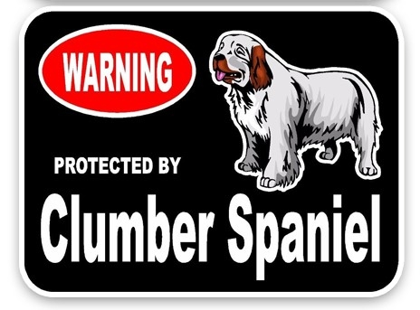 Clumber Spaniel Car Sticker -0
