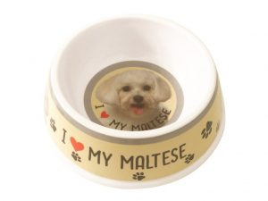 Maltese Feeding Bowl-0