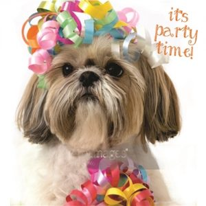 Shih Tzu- Birthday Card-0