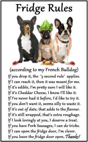 French Bulldog Fridge Rules Magnet-0