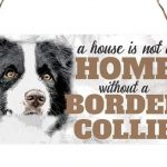 Border Collie hanging sign